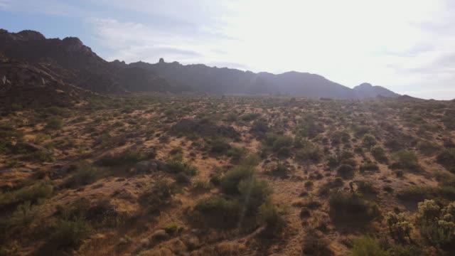 wüstenwildnis fliegt über saguaro cactus baum durch untersien der sonne hinterleuchtet.  toms thumb, mcdowell mountains, scottsdale,arizona,usa - südwesten stock-videos und b-roll-filmmaterial