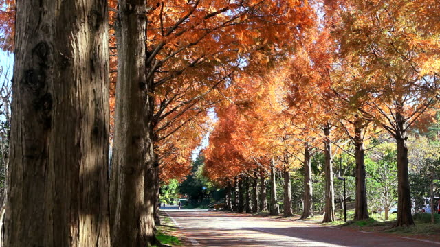 Deserted tree-lined avenue in autumn (fall) video