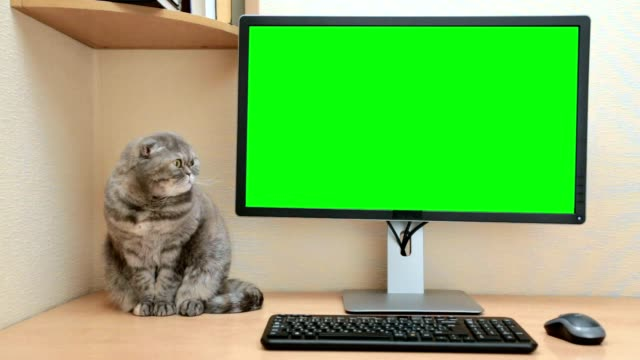 Desktop computer with a green screen in the home room.