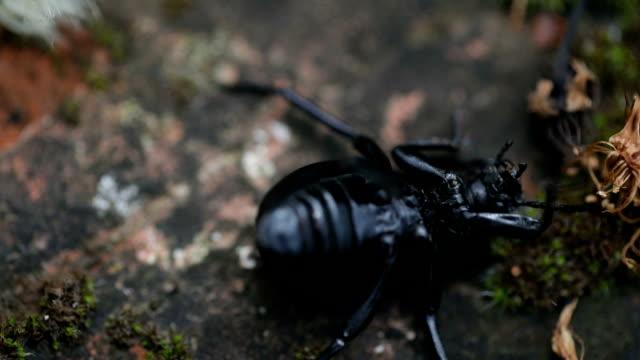 verzweiflung - käfer stock-videos und b-roll-filmmaterial
