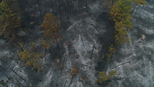 Destroyed forest after fire from aerial view video