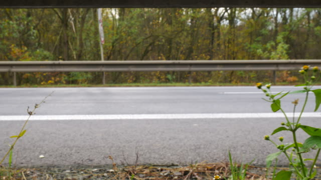 detail of a plant at the road with big traffic. with sound. no camera movement. - parapetto barriera video stock e b–roll