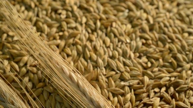 大麦のディテール。ドリー ショット。 - 大麦点の映像素材/bロール