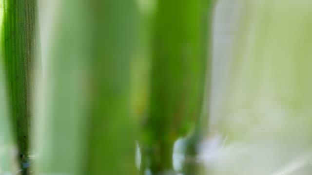 detalj av grässtrån - intoning bildbanksvideor och videomaterial från bakom kulisserna
