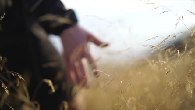일몰에 키가 큰 잔디를 통해 이동 손의 세부 사항 - 초점 이동 스톡 비디오 및 b-롤 화면