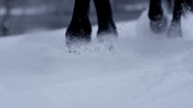 SLOW MOTION CLOSE UP Detail of horse hooves walking in fresh soft snow in winter video