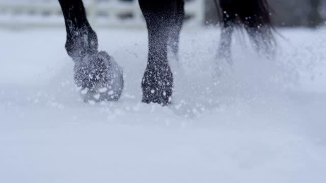 DOF: Detail of horse hooves walking in fresh soft snowy blanket in wintertime video