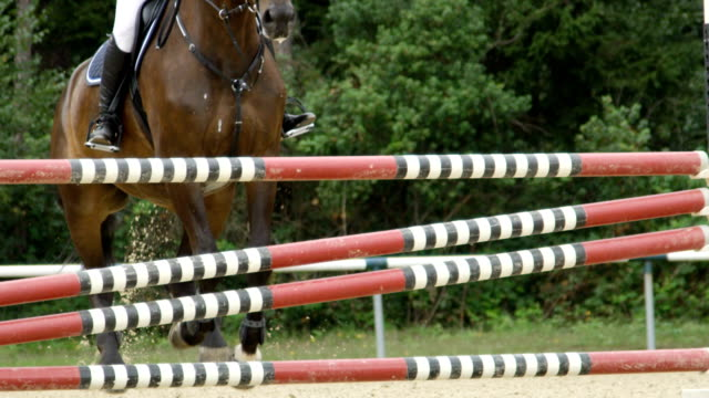 närbild: detalj av hästhoppning tappert över stängslet på hoppning konkurrens - hästhoppning bildbanksvideor och videomaterial från bakom kulisserna