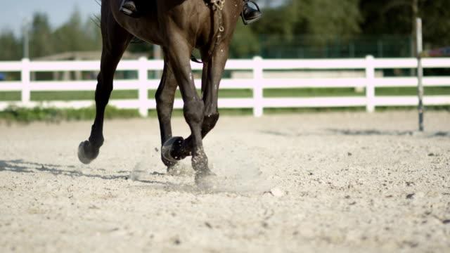 vidéos et rushes de slow motion détail des jambes de cheval effectuant trot sur le côté dans une patinoire extérieure sable - dressage équestre