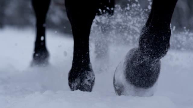 dof: detalj av hästen ben sprutning snöflingor runt när promenader i snön - häst bildbanksvideor och videomaterial från bakom kulisserna