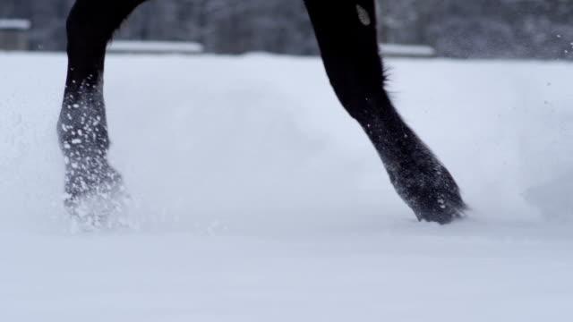 DOF: Detail of horse legs trotting through fresh snowy blanket on forest glade video