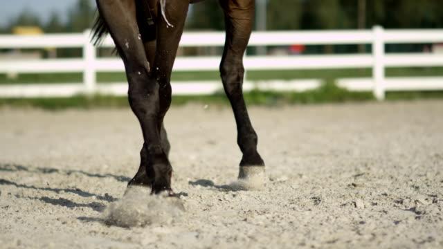 馬足を砂屋外アリーナの横にトロットを作業のスローモーション: 詳細 - 動物に乗る点の映像素材/bロール