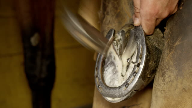 close up: detail of qualified farrier gently tapping nailhead in horse's hoof - horseshoe stock videos & royalty-free footage