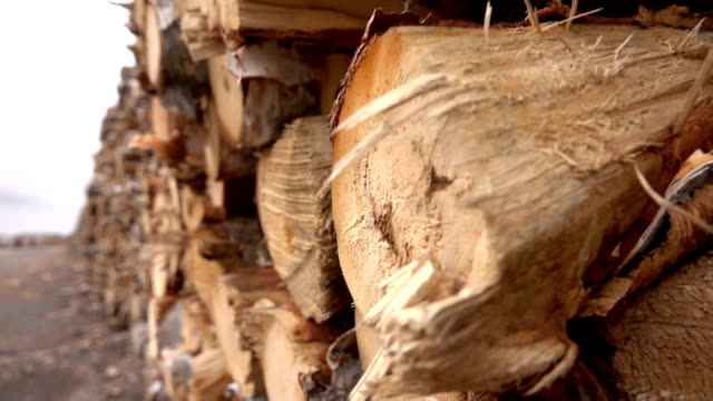 CLOSE UP Detail of shredded wood and bark on a cut log stacked in a big woodpile video