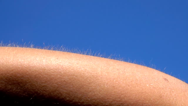 CLOSE UP MACRO DOF: Detail of skin goosebumps, hair on female's arm raised up CLOSE UP MACRO DEPTH OF FIELD: Detail of skin and hair with goose bumps on female's forearm against blue sky. Light hair on person's arm raised up. Bright Caucasian skin getting goosebumps and chills goosebumps stock videos & royalty-free footage
