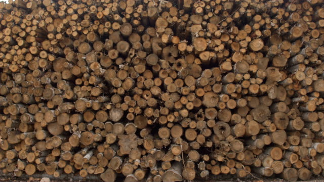 CLOSE UP Detail of timber logs of different diameter stacked in perfect woodpile video