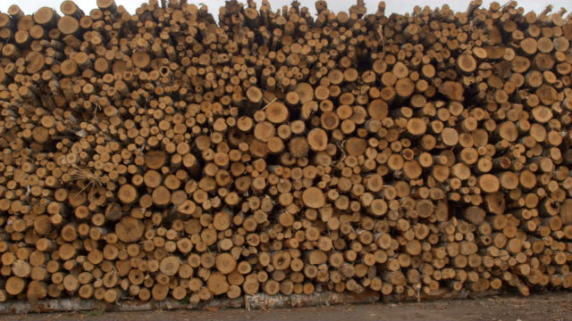 CLOSE UP: Detail of tree trunks and logs stacked in perfect lumber woodpile video