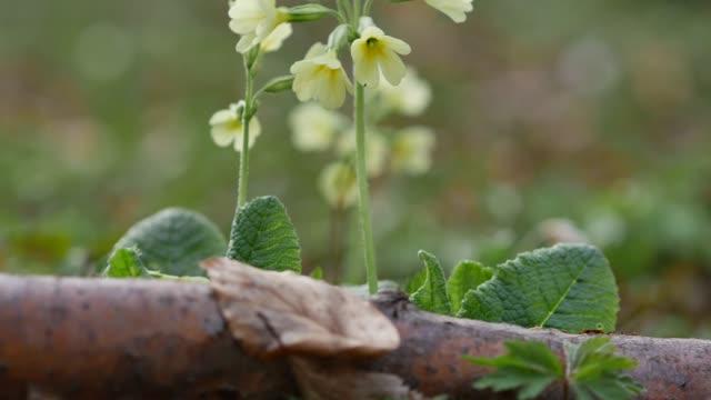 stockvideo's en b-roll-footage met detail van witte wilde bloemen - fresh start yellow