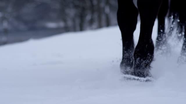 DOF: Detail of wild horse legs walking in fresh soft snowy blanket in wintertime video