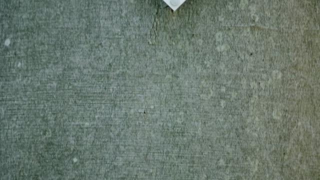 detail of woodpecker (picidae) - zachodnie pismo filmów i materiałów b-roll