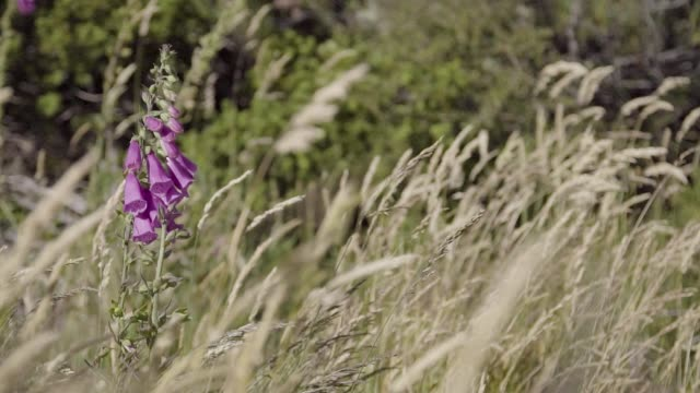 Detail shot of a purple wildflower and tall grass