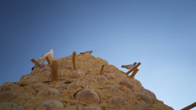 이집트의 점토 구조물에 비둘기의 세부 샷 - 초점 이동 스톡 비디오 및 b-롤 화면