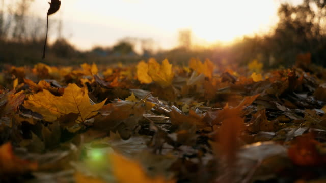 Detail view on yellow autumn leaves slowly falling on ground. Ground covered with dry vivid foliage. Bright sunset light illuminates fallen leaves. Colorful fall season. Slow motion Dolly shot