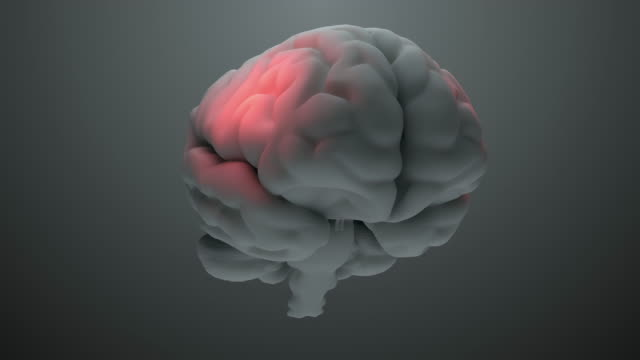 vídeos de stock e filmes b-roll de detailed gray brain model with pain zones - active brain