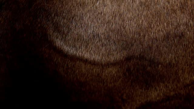 vídeos y material grabado en eventos de stock de caballo detallada de la piel - peludo