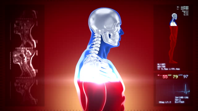 Detailed human body turning. Scan. Loopable. Blue/white. Red background. video