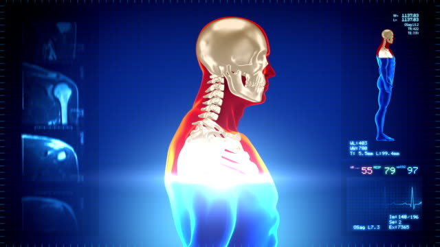 Detailed human body turning. Skeleton. Loopable. Red/white. Blue background. video