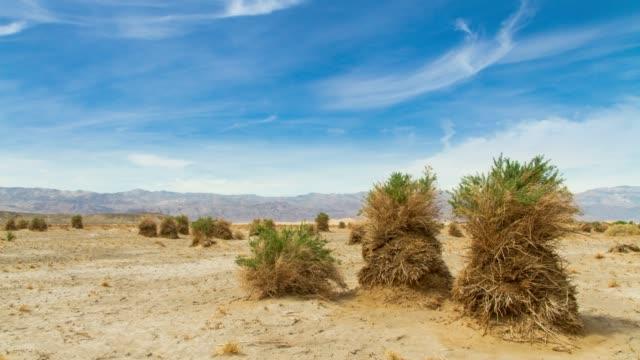 vídeos de stock e filmes b-roll de devil's cornfield in death valley, california - parque nacional do vale da morte