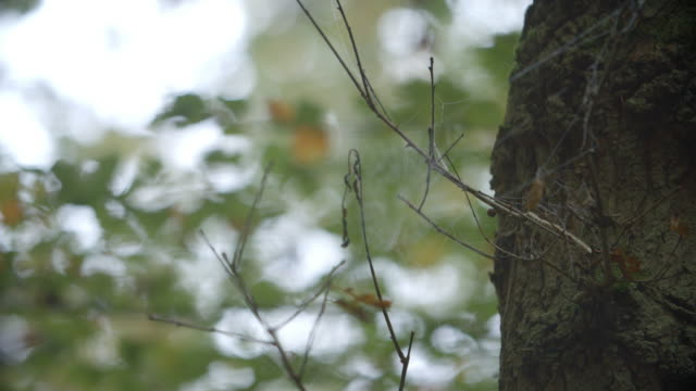Dew Covered Cobweb In Autumn Woodland video