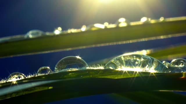 Dew drops at dawn dew drops at dawn leaf vein stock videos & royalty-free footage