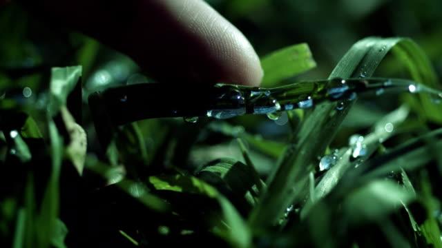 капли росы на траве осенью - tap water стоковые видео и кадры b-roll