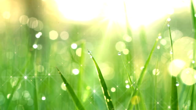 dew drops in lights on green grass. shot with slider.