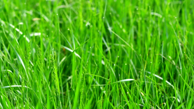dew drops in lights on green grass. shot with slider. - lama oggetto creato dall'uomo video stock e b–roll
