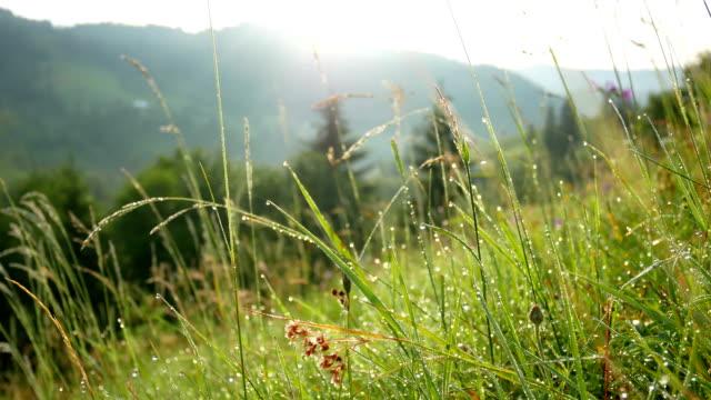 stockvideo's en b-roll-footage met dauw druppels ochtend plant - plantdeel