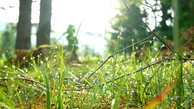 Dew drops morning plant Background of dew drops on bright green grass plant part stock videos & royalty-free footage