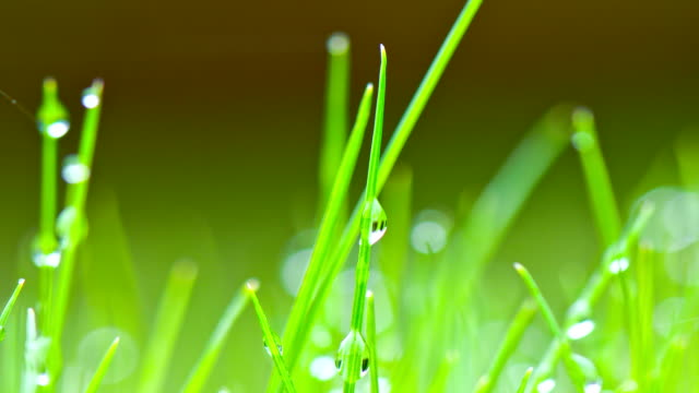 Dew Drops on morning grass Blurred grass background with water drops blade of grass stock videos & royalty-free footage