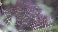 istock Dew in spider web 1320186780
