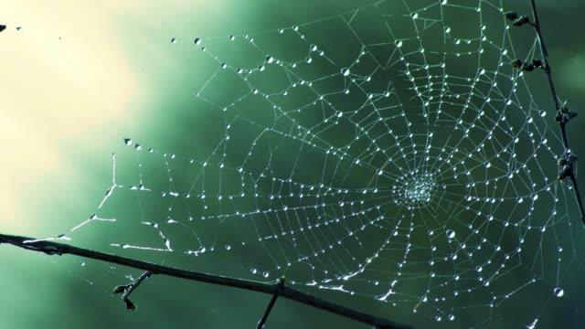 dagg i spiderweb - spindelväv bildbanksvideor och videomaterial från bakom kulisserna