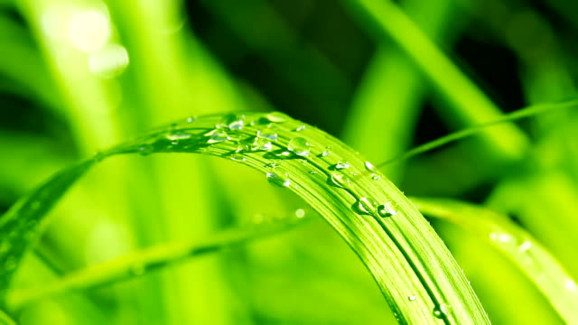 dew on the grass dew on the grass blade of grass stock videos & royalty-free footage