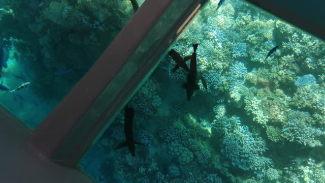 Different fish swim among the coral reefs - top view through a window at the bottom of the boat (15)