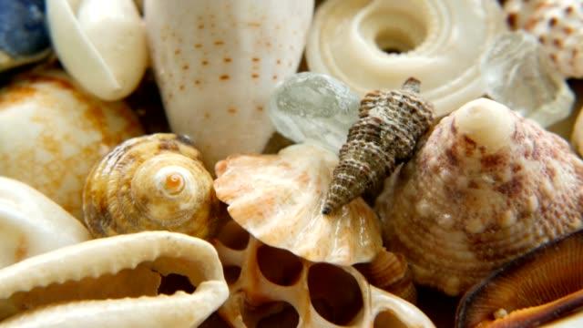vidéos et rushes de différents coquillages colorés mélangés comme toile de fond. divers coraux, les mollusques et les coquilles. - coquillage