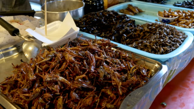Different types of Cooked insects on a plate at food market. Asia, Thailand, Pattaya video