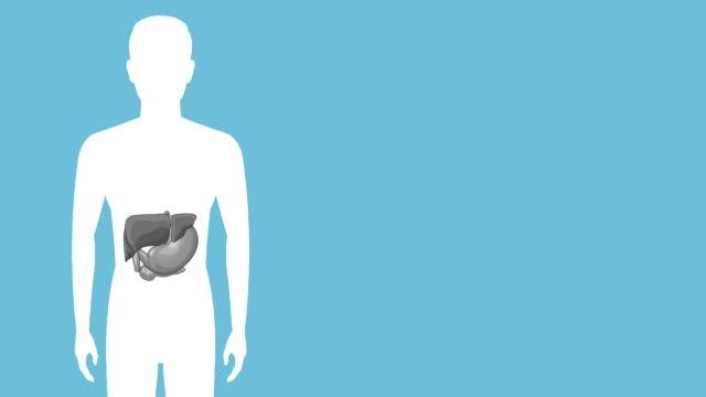 Bидео Digestive system concept HD animation