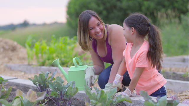 Digging in the Garden A little girl and her mother dig in the garden in their backyard. horticulture stock videos & royalty-free footage
