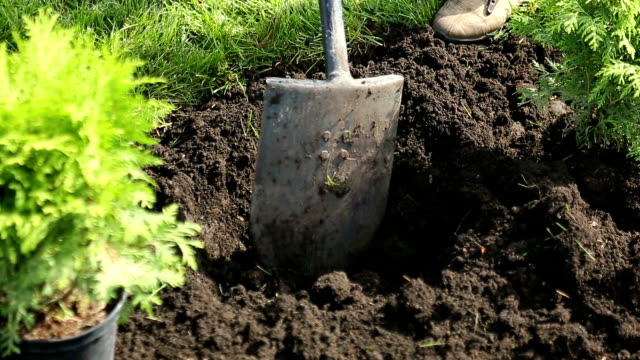 Digging the hole Digging the hole with shovels ornamental garden stock videos & royalty-free footage