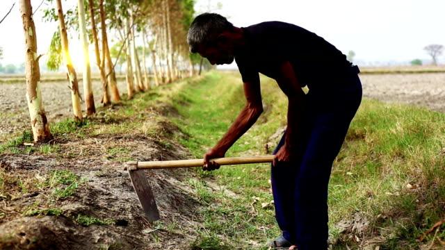 gräva - haryana bildbanksvideor och videomaterial från bakom kulisserna